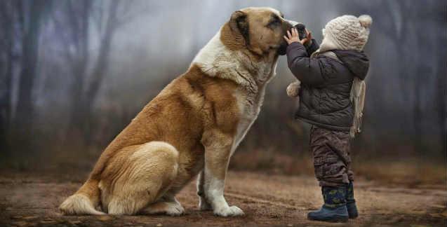 Amore tra i cani e l'uomo